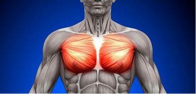ダンベルプレスで鍛えられる筋肉|大胸筋